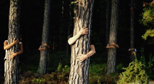 ecologia emocional abrazar arboles